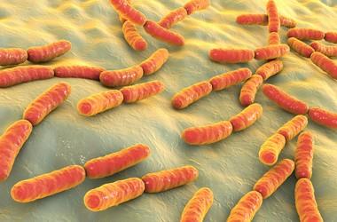 Bakterie – sposoby ich szerzenia się i zakażania